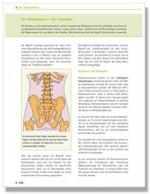 Der Kreuzschmerz - Die Lumbalgie